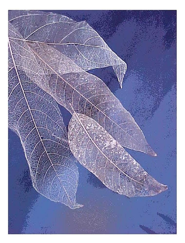 Blue Leaves 1