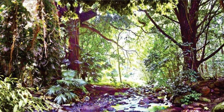 Maunawili Stream