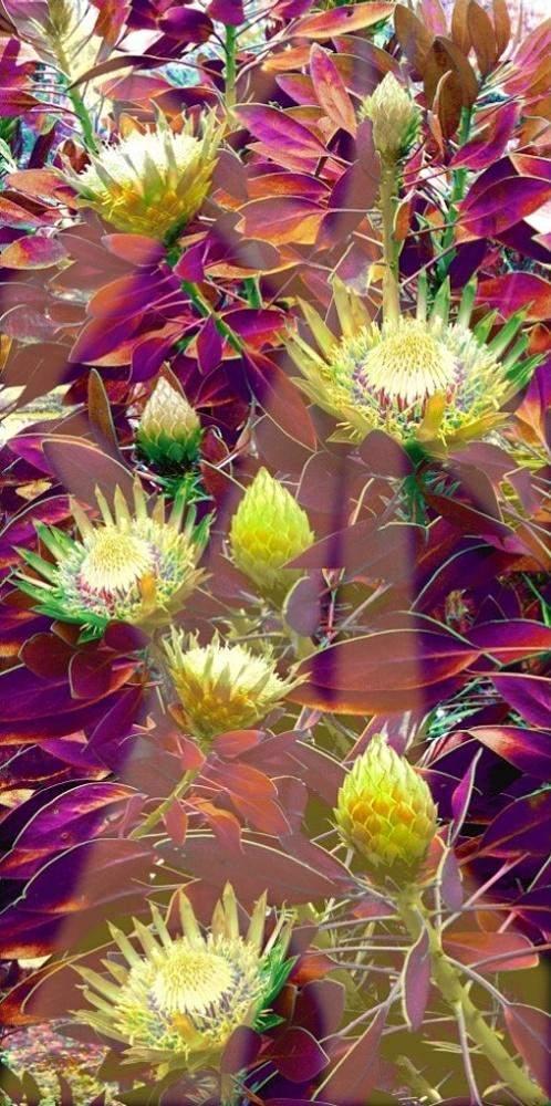 Proteas Green