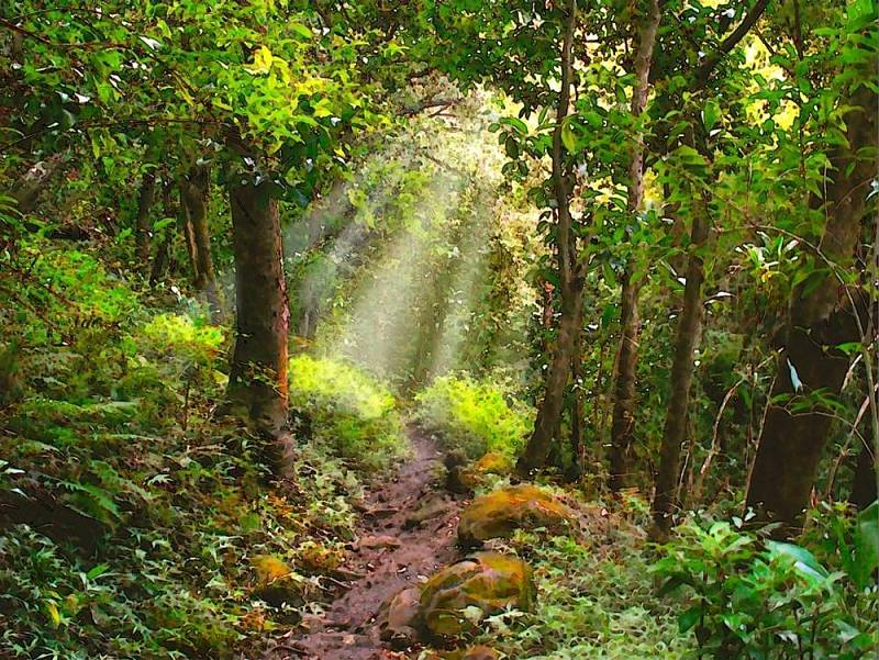 Tropical Rainforest Painting